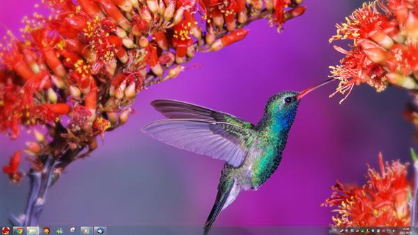 theme windows 7 magnifique oiseaux