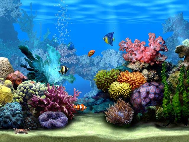Living Marine Aquarium 2  ecran de veille