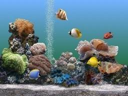logiciel-pc-sachs-marine-aquarium